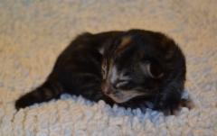 1 viikon vanha / 1 week old