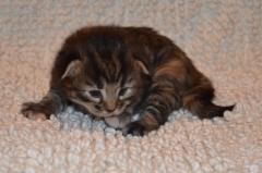 2 viikkoa vanha / 2 weeks old