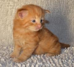 3 viikkoa vanha / 3 weeks old