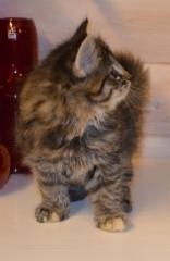 6 viikkoa vanha / 6 weeks old