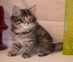 7 viikkoa vanha / 7 weeks old