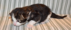 2 viikkoa / 2 weeks old