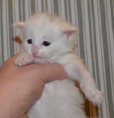 3 viikkoa / 3 weeks old