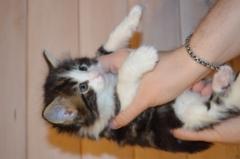 5 viikkoa / 5 weeks old