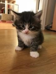 5 viikkoa vanha / 5 weeks old