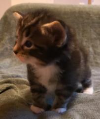 4 viikkoa vanha / 4 weeks old