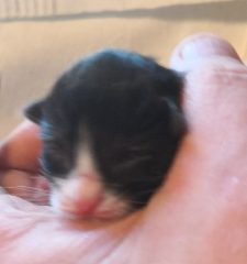 1 vrk / 1 day old