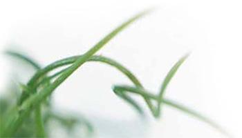 grass2_left.jpg