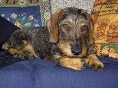 Nora sohvalla 2005