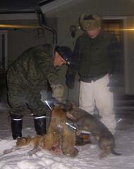 Miro ja Noran kettu 10.2.2007