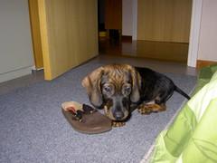 Kenkä maistuu 3.10.2007