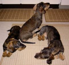 Pyry, Nora ja Miro 8.1.2008