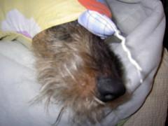 Miro eksyi sängyssä pussilakanaan!