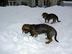 Pyry ja Miro pihassa 8.2.2008