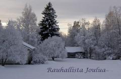 joulukortti 2007