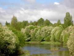 Temmesjoki keväällä
