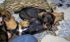 emppu ja ella 7.5.2009