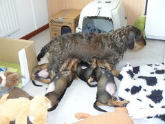 Noran äitienpäivä 2009