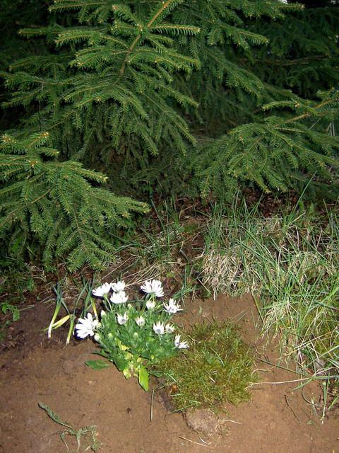 E-pojan hauta 21.5.2009