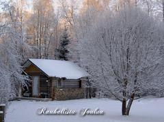 joulukortti 2009