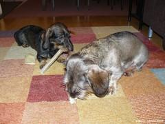 Pyry ja Miro jouluna 2009