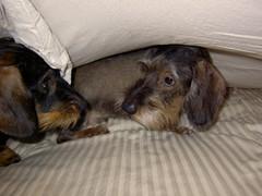 Pyry ja Miro lakanan alla