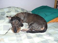 Nora makoilee, helmikuu 2010