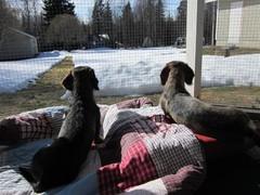 Pyry ja Miro ottavat aurinkoa terassilla