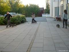 kastehelmi_kakon_handleritunti_kiiminki_2.9_1