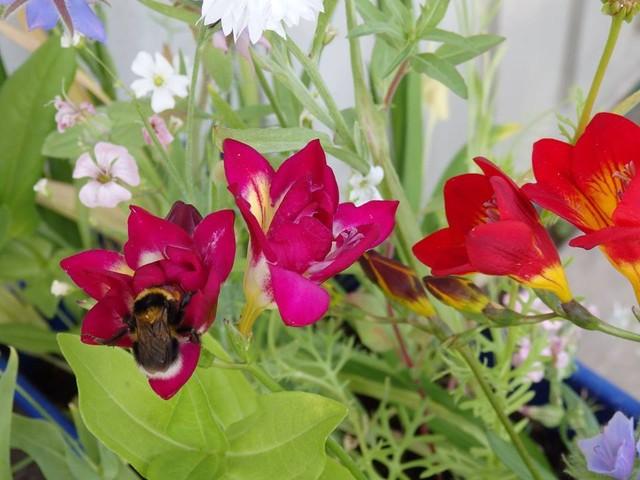 kukkia_ja_kimalainen