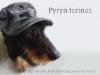 Pyryn tarinaa 10 vuoden ajalta. 29.6.2017 -