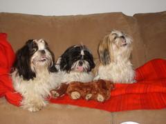 Jelly, Safka ja Dippi
