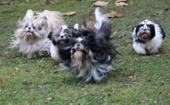 Dippi, Rommi, Safka ja Doris