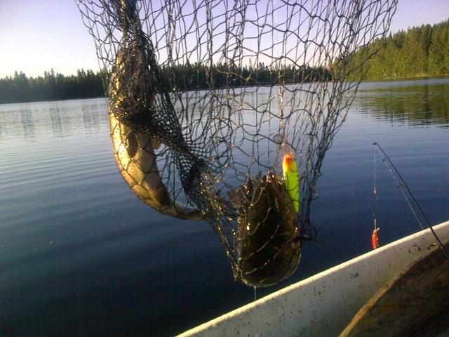 Maunulammen koe kalastusta 2010