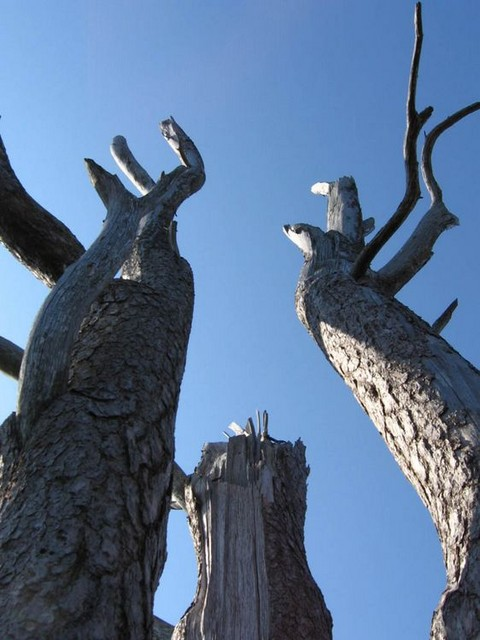puuu tai mit� siit� on j�ljell�