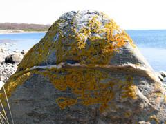 iso kivi rannalla