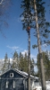 Vaarallisen puun poisto