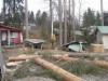 Sahapuita pihapuista via arboristi