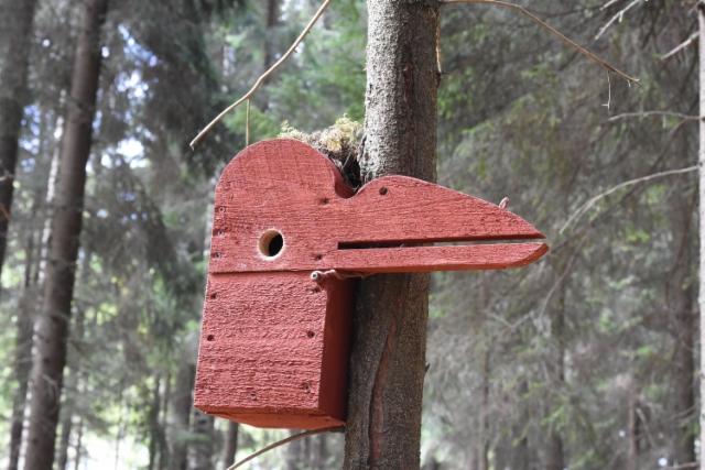 linnunpontto