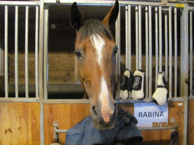 Rabina, opettajan hevonen