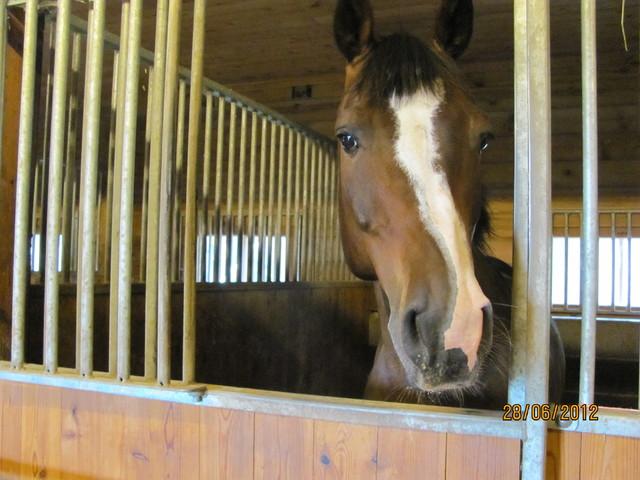 Genesis, opettajan hevonen