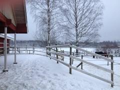 talvi10