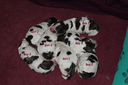 puppies_day1.jpg