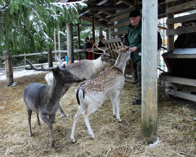 Pauli ja Bambi