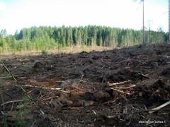 metsänpohjan muokkaus