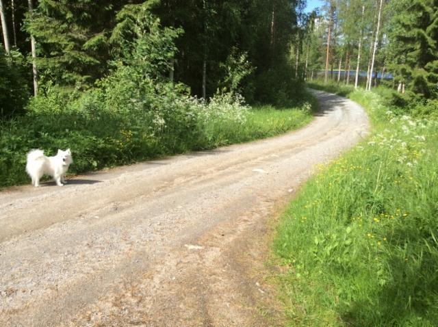 Koira ja koiranputket tien varrella