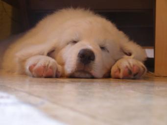 pikkumies unilla