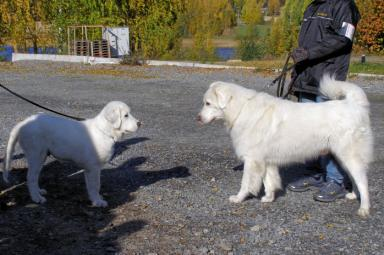 shiloh tatra ja isukki snowy coats cute polar bear