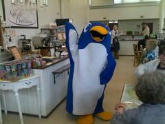 pingviini_kavi_puustinnassa_jatkilla