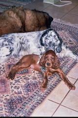 Koiramme ik� j�rjestyksess� vuonna 2004